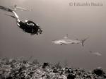 Buzo y Tiburón / Diver and Shark